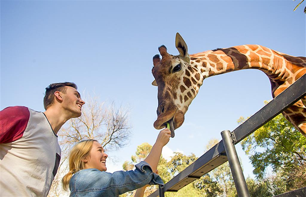 Monarto Zoo - General Admission